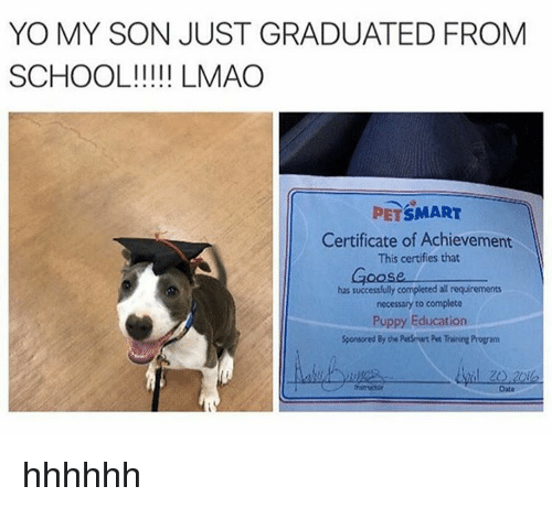 Petsmart, Programming, and Als: YO MY SON JUST GRADUATED FROM  SCHOOL LMAO  PETSMART  Certificate of Achievement  This certifies that  has successfully completed al requirements  necessary to complete  Puppy Education  Sponsored Byte Petsrurt Pet Training Program  Date hhhhhh