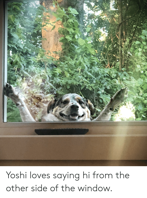 Yoshi, Window, and Side: Yoshi loves saying hi from the other side of the window.