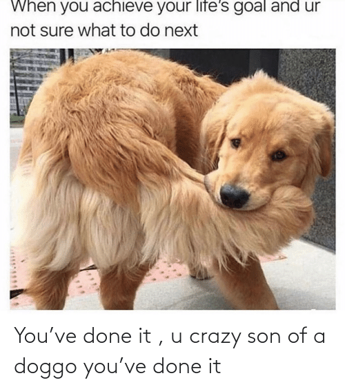 crazy: You've done it , u crazy son of a doggo you've done it