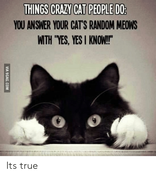 "Yesie: YOU ANSWER YOUR CAT'S RANDOM MEOWS  WITH ""YES, YESI KNOW!  0 o Its true"