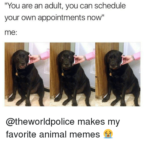 "Memes, Schedule, and 🤖: ""You are an adult, you can schedule  your own appointments now""  me @theworldpolice makes my favorite animal memes 😭"