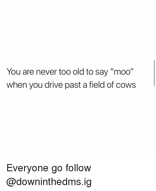 """Memes, Drive, and Old: You are never too old to say """"moo""""  when you drive past a field of cows Everyone go follow @downinthedms.ig"""