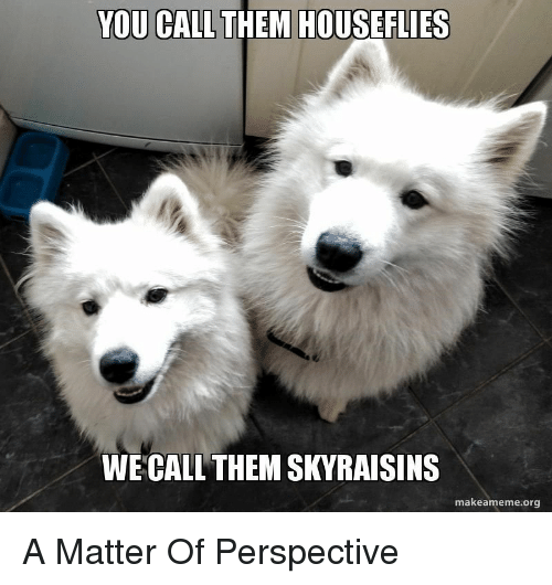 A Matter, Org, and Them: YOU CALL THEM HOUSEFLIES  WE CALL THEM SKYRAISINS  makeameme.org A Matter Of Perspective