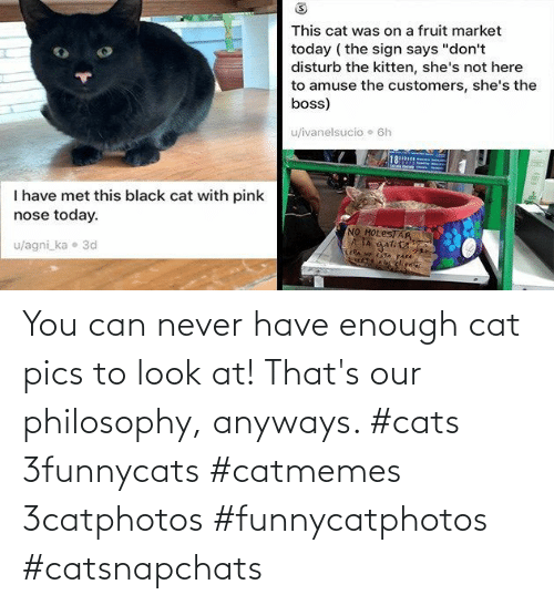 Philosophy: You can never have enough cat pics to look at! That's our philosophy, anyways. #cats 3funnycats #catmemes 3catphotos #funnycatphotos #catsnapchats