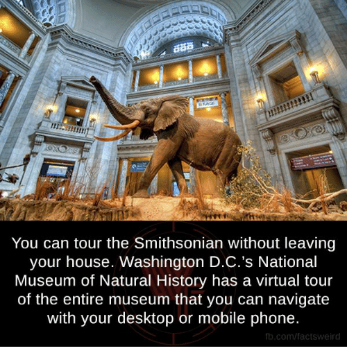 Memes, Mobile, and Nature: You can tour the Smithsonian without leaving  your house. Washington D.C.'s National  Museum of Natural History has a virtual tour  of the entire museum that you can navigate  with your desktop or mobile phone.  fb.com/facts Weird