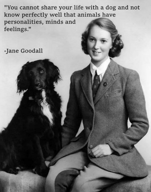 """Animals, Life, and Memes: """"You cannot share your life with a dog and not  know perfectly well that animals have  personalities, minds and  feelings.""""  -Jane Goodall"""
