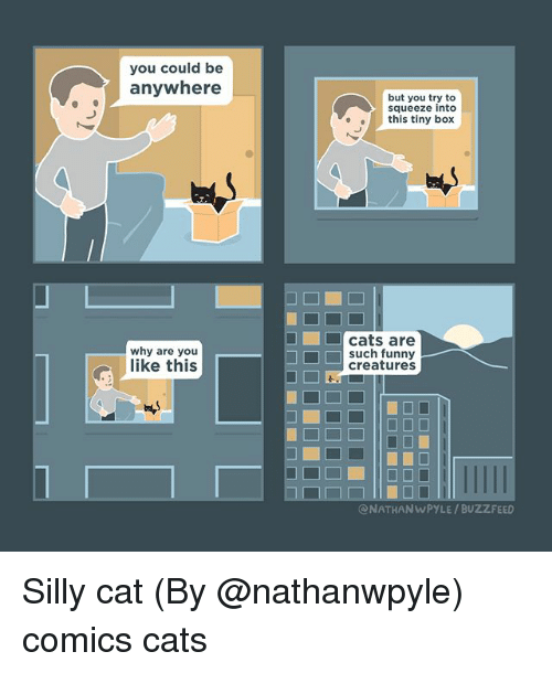 Cats, Funny, and Memes: you could be  anywhere  but you try to  squeeze into  this tiny box  why are you  like this  cats are  such funny  creatures  ONATHANWPYLE / BUZZFEED Silly cat (By @nathanwpyle) comics cats