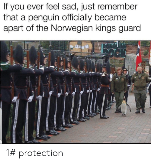 Norwegian: you ever feel sad, just remember  that a penguin officially became  apart of the Norwegian kings guard  If 1# protection