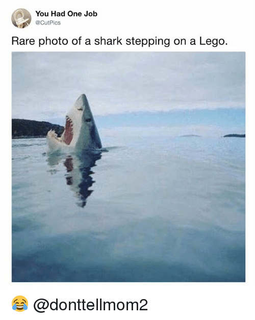 Lego, Memes, and Shark: You Had One Job  @CutPics  Rare photo of a shark stepping on a Lego. 😂 @donttellmom2