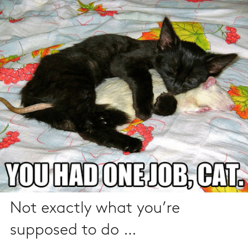 Supposed: YOU HAD ONEJOB, CAT. Not exactly what you're supposed to do …