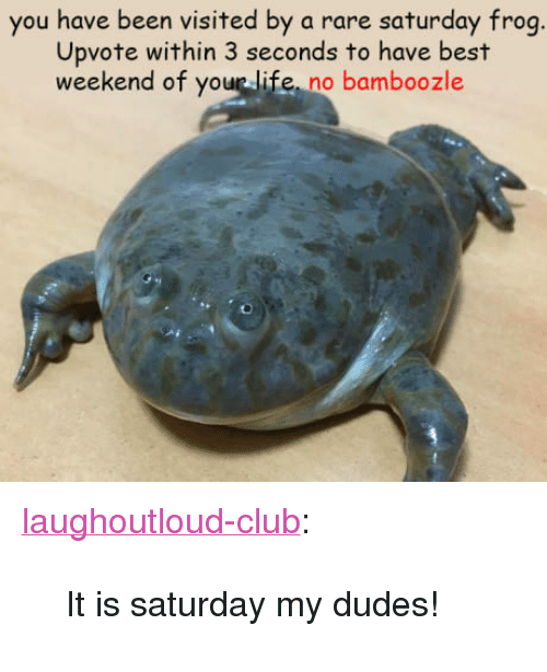 """Club, Life, and Tumblr: you have been visited by a rare saturday frog  Upvote within 3 seconds to have best  weekend of your life, no bamboozle <p><a href=""""http://laughoutloud-club.tumblr.com/post/163930039420/it-is-saturday-my-dudes"""" class=""""tumblr_blog"""">laughoutloud-club</a>:</p>  <blockquote><p>It is saturday my dudes!</p></blockquote>"""