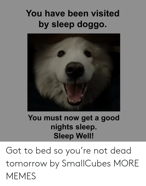 sleep well: You have been visited  by sleep doggo.  You must now get a good  nights sleep.  Sleep Well! Got to bed so you're not dead tomorrow by SmallCubes MORE MEMES