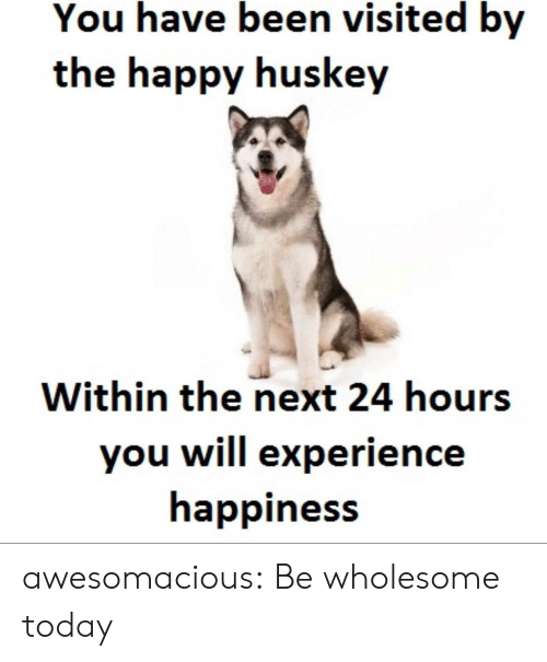 Tumblr, Blog, and Happy: You have been visited by  the happy huskey  Within the next 24 hours  you will experience  happiness awesomacious:  Be wholesome today