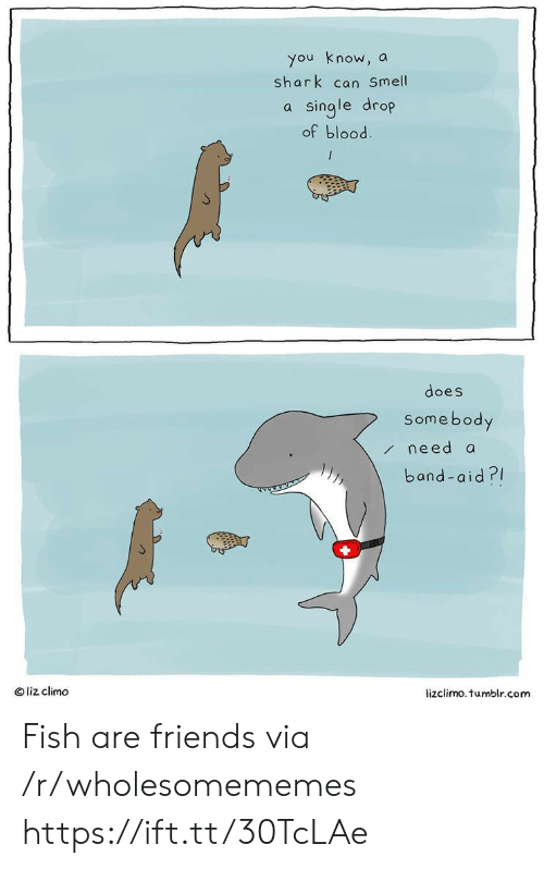Lizclimo Tumblr: you know, a  shark can Smell  a single drop  of blood  does  Somebody  /need a  band-aid?  Oliz climo  lizclimo.tumblr.com Fish are friends via /r/wholesomememes https://ift.tt/30TcLAe