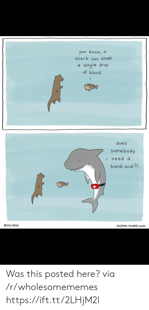 Lizclimo Tumblr: you know, a  shark can Smell  single drop  of blood.  /  does  Somebody  need a  band-aid?  Oliz climo  lizclimo. tumblr.com Was this posted here? via /r/wholesomememes https://ift.tt/2LHjM2l