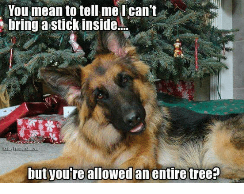 You Mean To Tell Me: You mean to tell me I can't  bring stick inside....  but youre allowed an entire tree