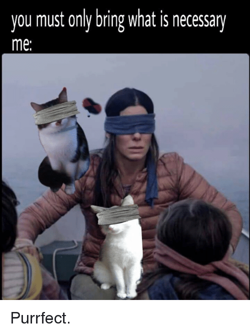 Memes, What Is, and 🤖: you must only bring what is necessary  me: Purrfect.