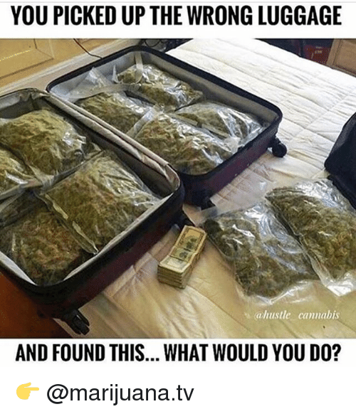 Memes, Luggage, and Marijuana: YOU PICKED UP THE WRONG LUGGAGE  ahustle cannabis  AND FOUND THIS... WHAT WOULD YOU DO? 👉 @marijuana.tv