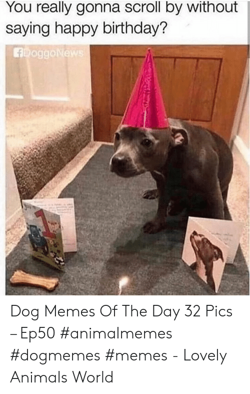 Animals, Birthday, and Memes: You really gonna scroll by without  saying happy birthday?  FoggoNews Dog Memes Of The Day 32 Pics – Ep50 #animalmemes #dogmemes #memes - Lovely Animals World