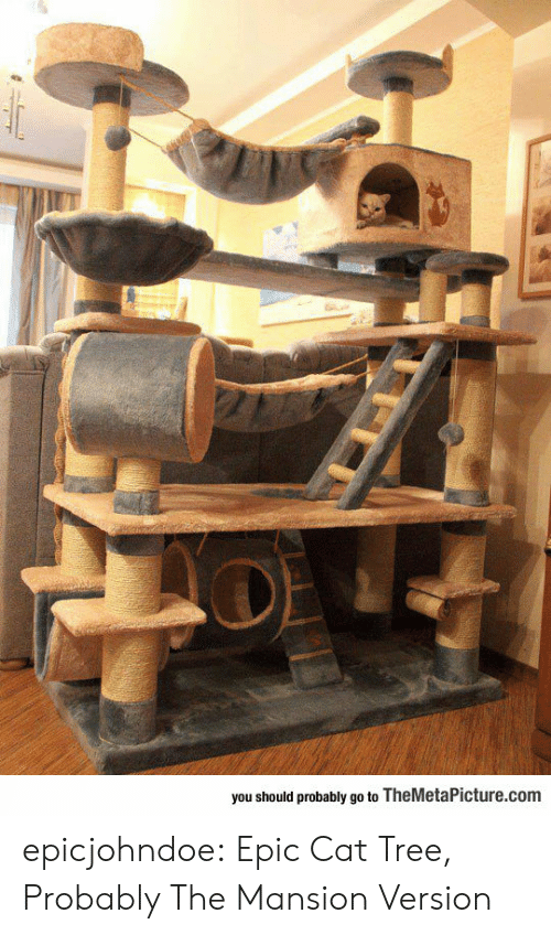 Should Probably: you should probably go to TheMetaPicture.com epicjohndoe:  Epic Cat Tree, Probably The Mansion Version