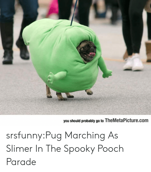 Marching: you should probably go to TheMetaPicture.com srsfunny:Pug Marching As Slimer In The Spooky Pooch Parade