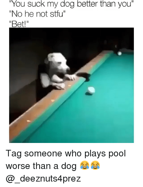 "Memes, Stfu, and Pool: You  suck my dog better than  you""  ""No he not stfu"" Tag someone who plays pool worse than a dog 😂😂 @_deeznuts4prez"