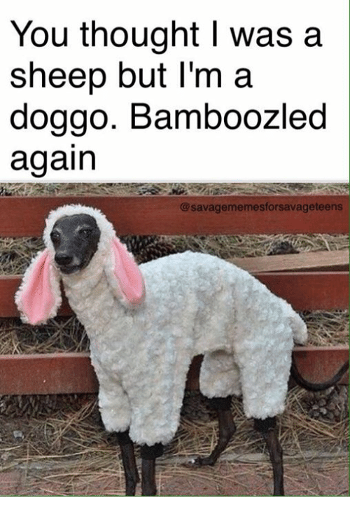 Dank Memes, Thought, and Doggo: You thought I was a  sheep but I'm a  doggo. Bamboozled  again  @savagememesforsavage teens