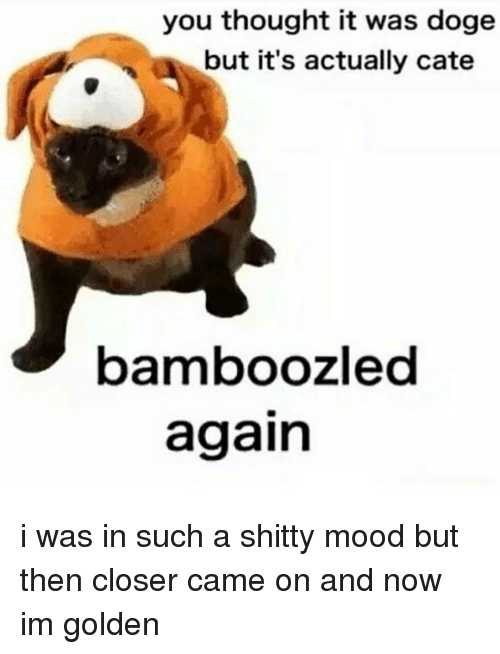 Doge, Memes, and 🤖: you thought it was doge  but it's actually cate  bamboozled  again i was in such a shitty mood but then closer came on and now im golden