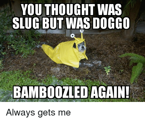Funny, Thought, and Slug: YOU THOUGHT WAS  SLUG BUT WAS DOGCO  BAMBOOZLED AGAIN! Always gets me