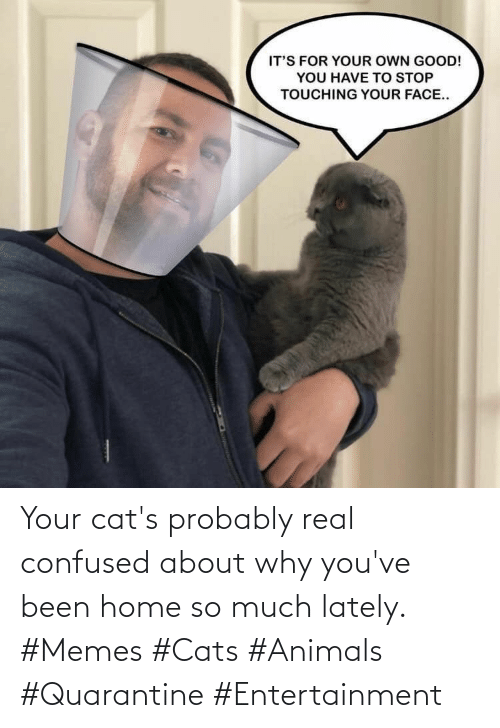 lately: Your cat's probably real confused about why you've been home so much lately. #Memes #Cats #Animals #Quarantine #Entertainment