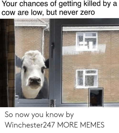 cow: Your chances of getting killed by a  Cow are low, but never zero So now you know by Winchester247 MORE MEMES