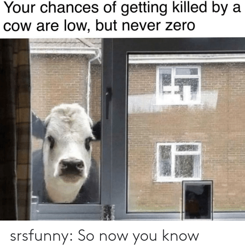 cow: Your chances of getting killed by a  Cow are low, but never zero srsfunny:  So now you know