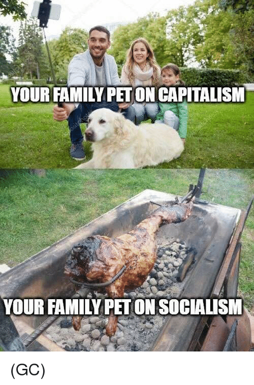 Family, Memes, and Capitalism: YOUR FAMILY PET ON CAPITALISM  YOUR FAMILY PET ON SOCIALISM (GC)