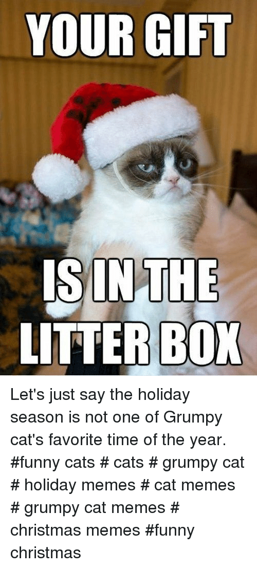 Grumpy Cats: YOUR GIFT  ISINTHE  LITTER BOX Let's just say the holiday season is not one of Grumpy cat's favorite time of the year. #funny cats # cats # grumpy cat # holiday memes # cat memes # grumpy cat memes # christmas memes #funny christmas
