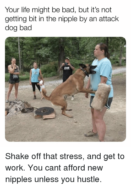 An Attack: Your life might be bad, but it's not  getting bit in the nipple by an attack  dog bad Shake off that stress, and get to work. You cant afford new nipples unless you hustle.