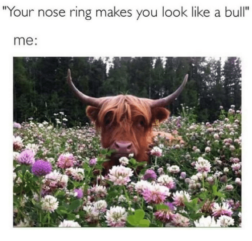 "Ring, Bull, and You: Your nose ring makes you look like a bull""  me:"