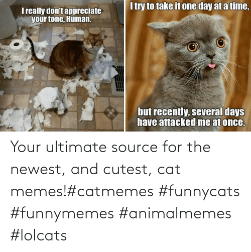 cat: Your ultimate source for the newest, and cutest, cat memes!#catmemes #funnycats #funnymemes #animalmemes #lolcats