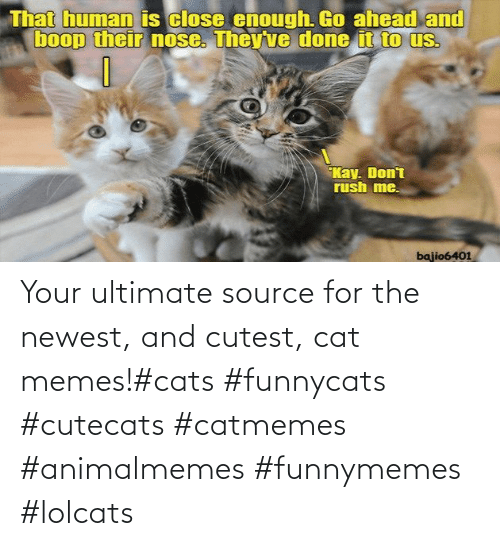 funnymemes: Your ultimate source for the newest, and cutest, cat memes!#cats #funnycats #cutecats #catmemes #animalmemes #funnymemes #lolcats