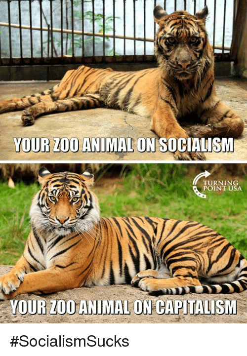 Memes, Animal, and Capitalism: YOUR ZOO ANIMAL ONSOCIALISM  TURNING  POINT USA  YOUR ZOOANIMAL ON CAPITALISM #SocialismSucks