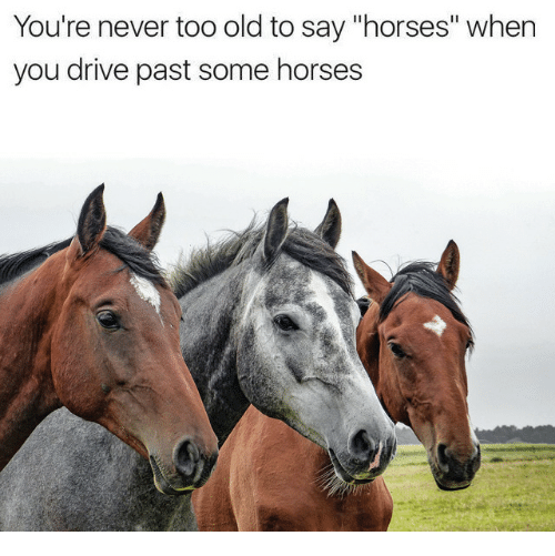 "Horses, Drive, and Old: You're never too old to say ""horses"" when  you drive past some horses"