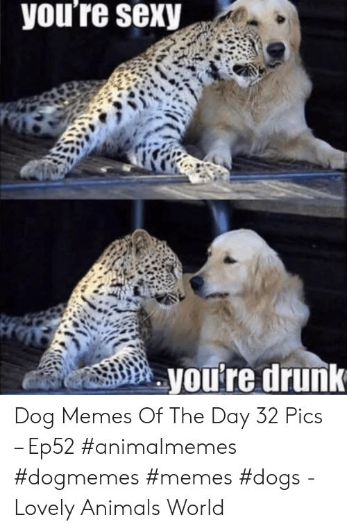 Youre Drunk: you're sexy  you're drunk Dog Memes Of The Day 32 Pics – Ep52 #animalmemes #dogmemes #memes #dogs - Lovely Animals World