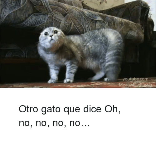 Oh No No: youtube.co  MeanwhileRussi <blockquote> <p>Otro gato que dice Oh, no, no, no, no…</p> </blockquote>