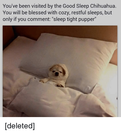 "Blessed, Chihuahua, and Good: You've been visited by the Good Sleep Chihuahua.  You will be blessed with cozy, restful Sleeps, but  only if you comment: ""sleep tight pupper"" [deleted]"