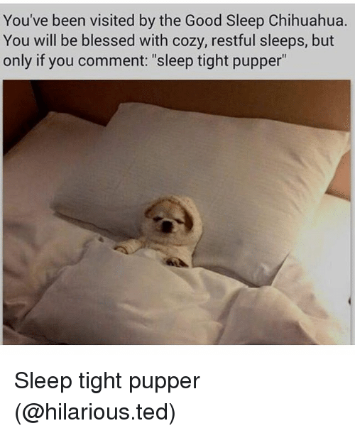 "Blessed, Chihuahua, and Funny: You've been visited by the Good Sleep Chihuahua.  You will be blessed with cozy, restful sleeps, but  only if you comment: ""sleep tight pupper"" Sleep tight pupper (@hilarious.ted)"