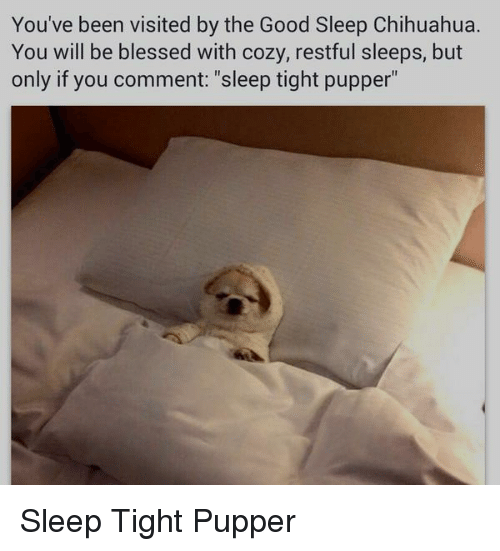 "Blessed, Chihuahua, and Good: You've been visited by the Good Sleep Chihuahua.  You will be blessed with cozy, restful sleeps, but  only if you comment: ""sleep tight pupper"" <p>Sleep Tight Pupper</p>"