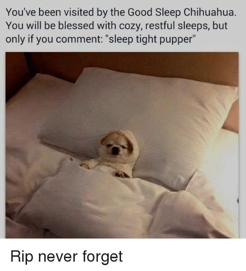 "Blessed, Chihuahua, and Dank: You've been visited by the Good Sleep Chihuahua.  You will be blessed with cozy, restful sleeps, but  only if you comment: ""sleep tight pupper"" Rip never forget"