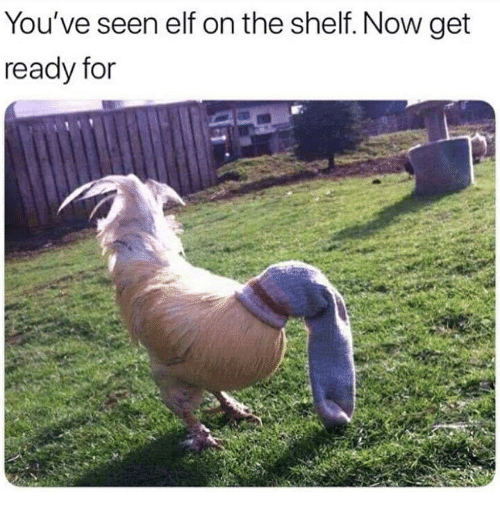 Elf, Elf on the Shelf, and Now: You've seen elf on the shelf. Now get  ready for