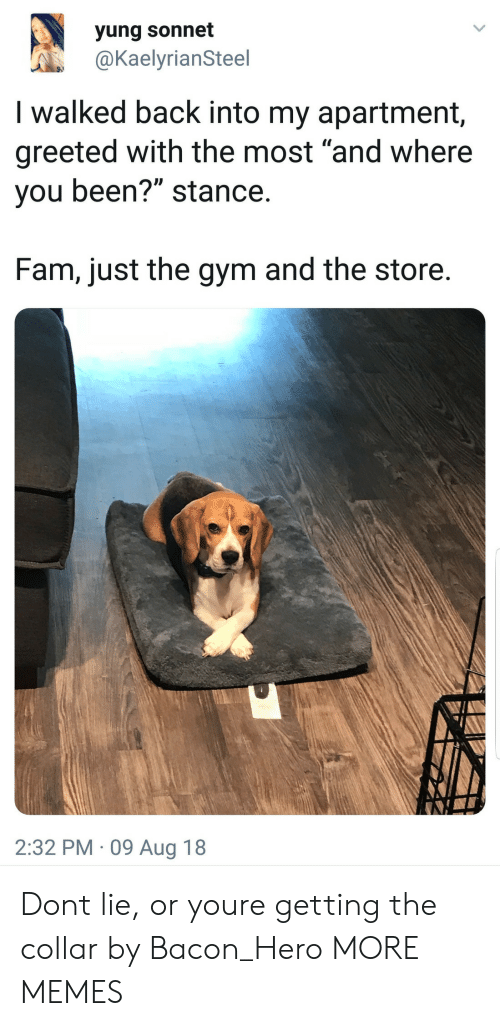 """Dank, Fam, and Gym: yung sonnet  @KaelyrianSteel  I walked back into my apartment,  greeted with the most """"and where  you been?"""" stance  Fam, just the gym and the store  2:32 PM 09 Aug 18 Dont lie, or youre getting the collar by Bacon_Hero MORE MEMES"""
