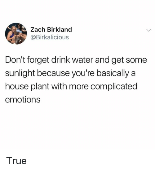 Dank, True, and House: Zach Birkland  @Birkalicious  Don't forget drink water and get some  sunlight because you're basically a  house plant with more complicated  emotions True