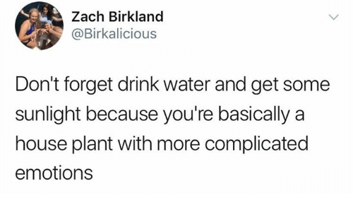 House, Water, and Humans of Tumblr: Zach Birkland  @Birkalicious  Don't forget drink water and get some  sunlight because you're basically a  house plant with more complicated  emotions